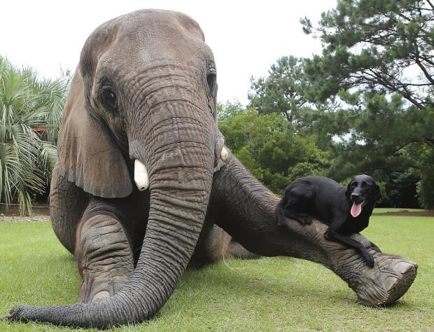 animales-amigos-15-620x474