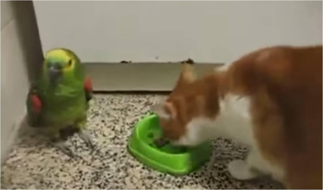 loro-vs-gato