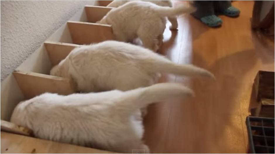 perritos-separadores