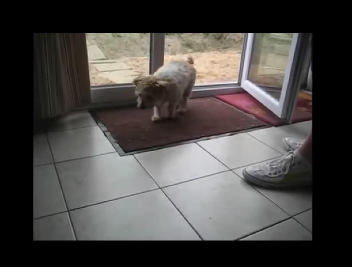 Quien no quiere un perro asi