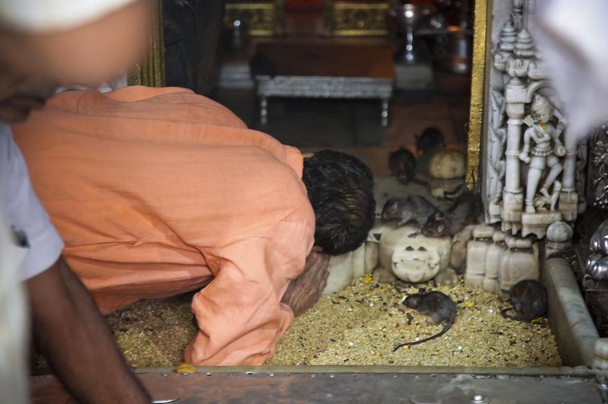 40-000-rats-temple-5__880