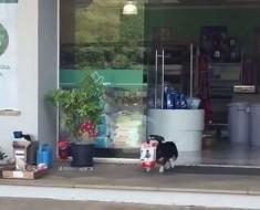 perro-con-su-alimento